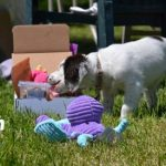 Have you heard of local Don Mills Dog Friendly Fetch My Box?